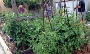 Lulu's Gardening Class