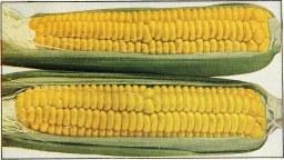 i8tonite: Late Summer Corn Hash